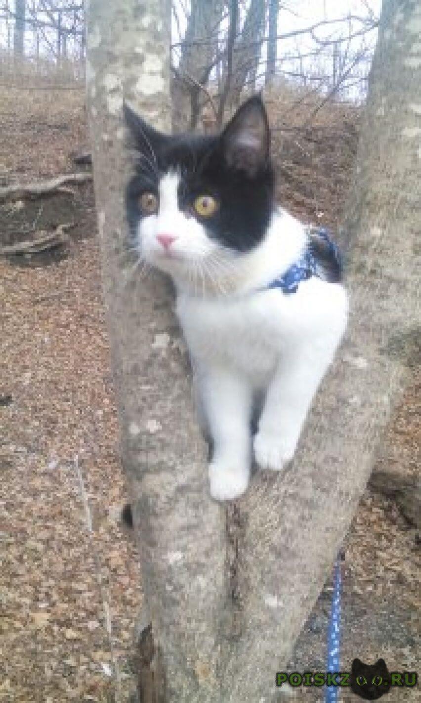 Пропал кот черно-белый на ладыгина. г.Владивосток