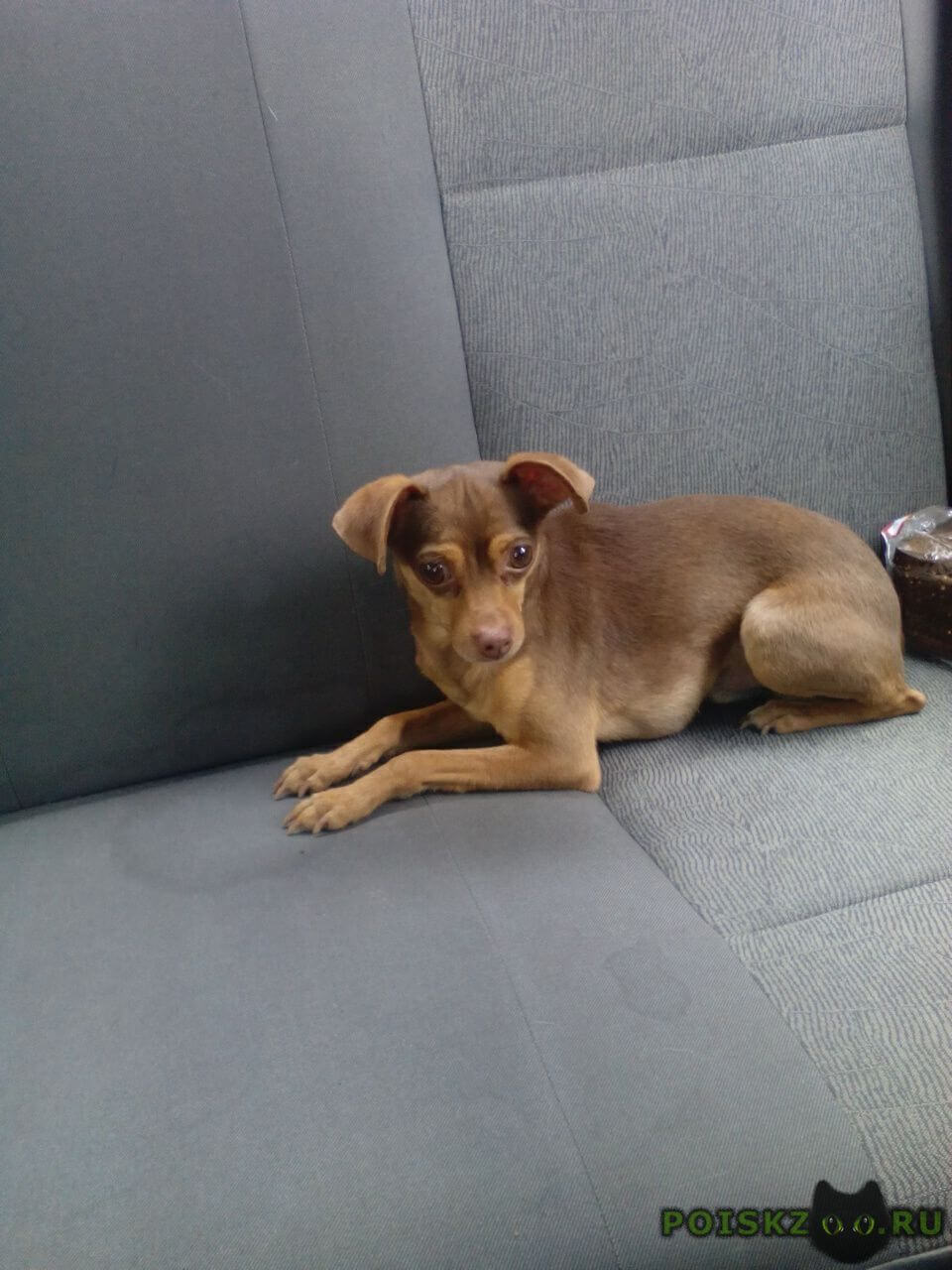 Найдена собака кобель г.Омск