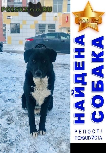 Найдена собака кобель г.Электросталь