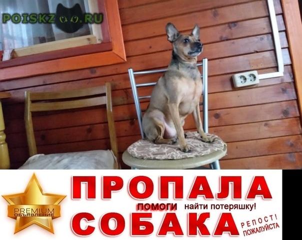 Пропала собака кобель г.Железнодорожный (Московск.)