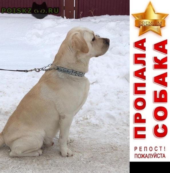 Пропала собака кобель любимый лабрадор г.Уфа
