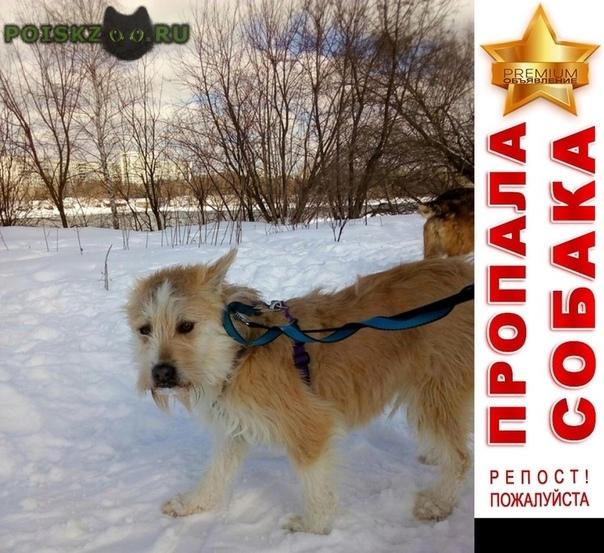 Пропала собака вознаграждение г.Мытищи