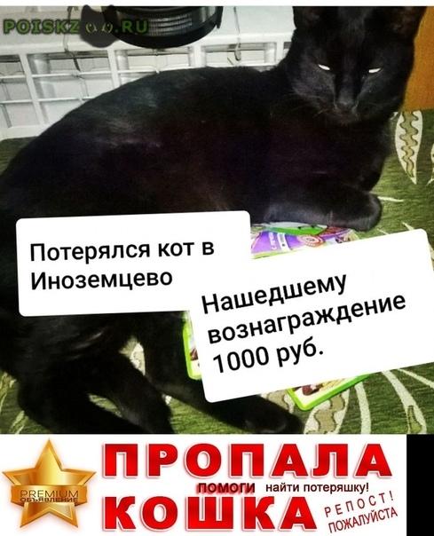 Пропал кот черный в г.Иноземцево