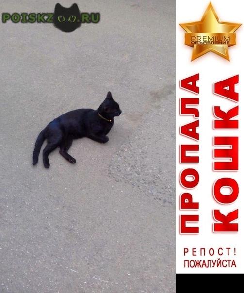 Пропал кот г.Красногорск