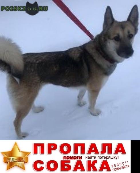 Пропала собака г.Немчиновка