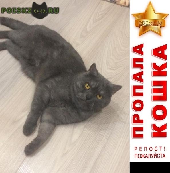 Пропал кот г.Чехов