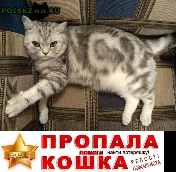 """Пропал кот породы """"вискас"""" мраморный британец г.Москва"""