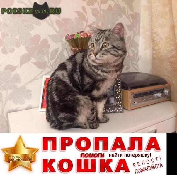 Пропал кот 09 мая в 22:00 г.Иркутск