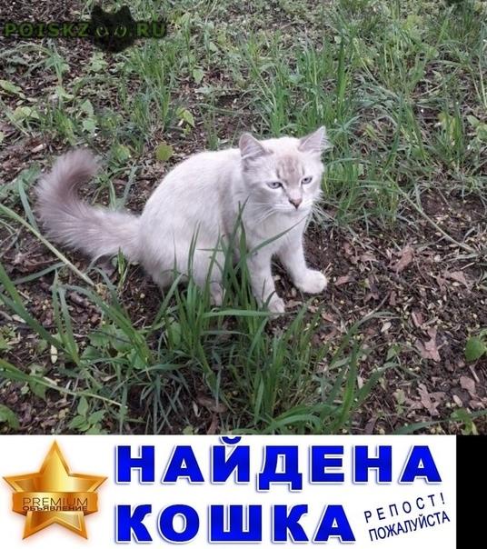 Найден кот г.Подольск