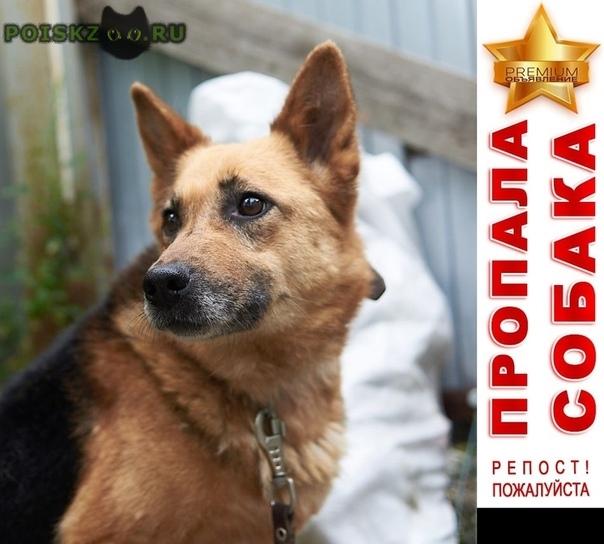 Пропала собака похожа на овчарку, район втузгородок г.Екатеринбург