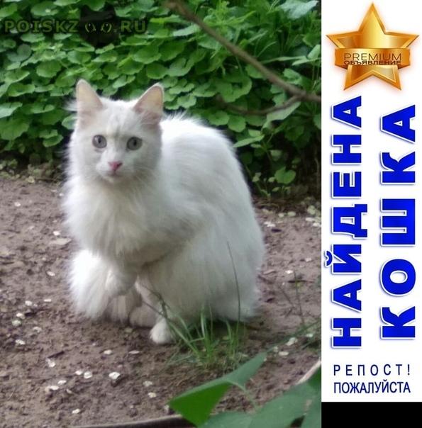 Найдена кошка (кот?) белоснежная, похожа на ангору г.Москва