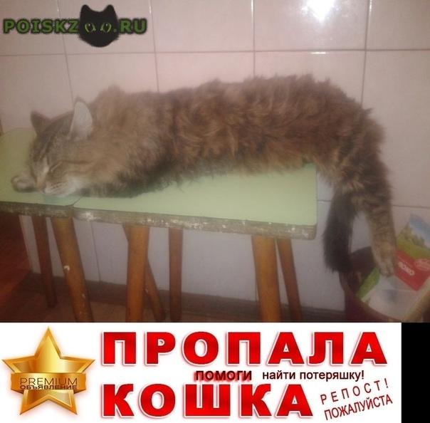 Пропал кот г.Воскресенск