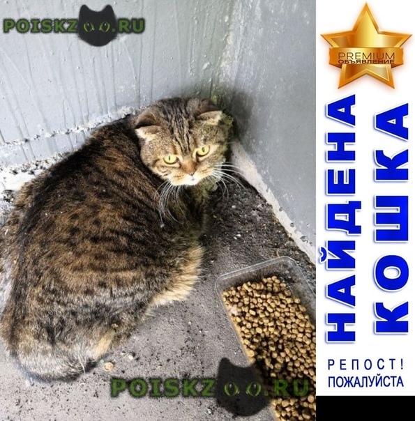 Найдена кошка с ошейником. британская вислоухая г.Москва