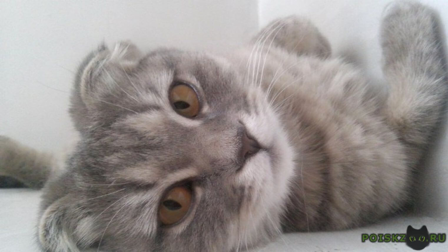 Пропала кошка вислоухая пушка г.Краснодар