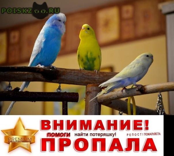 Пропало домашнее животное попугаи г.Истра