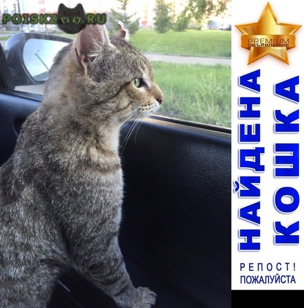Найден кот ищет передержку г.Киров (Кировская обл.)
