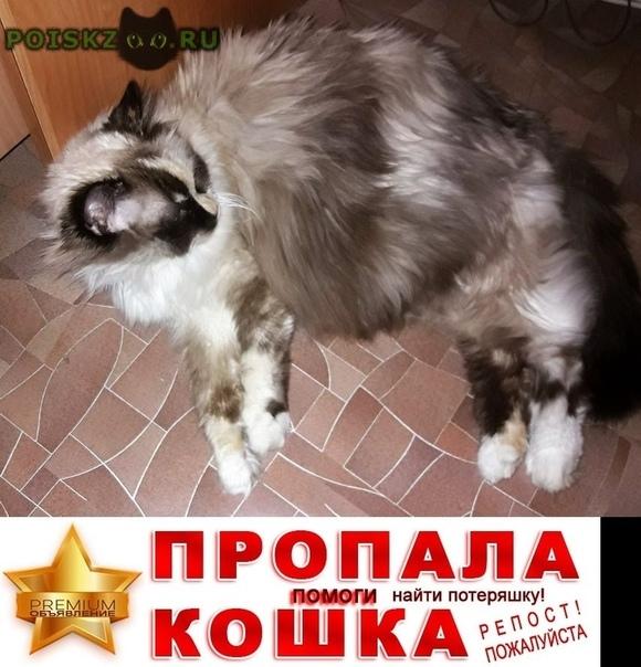 Пропала кошка г.Омск