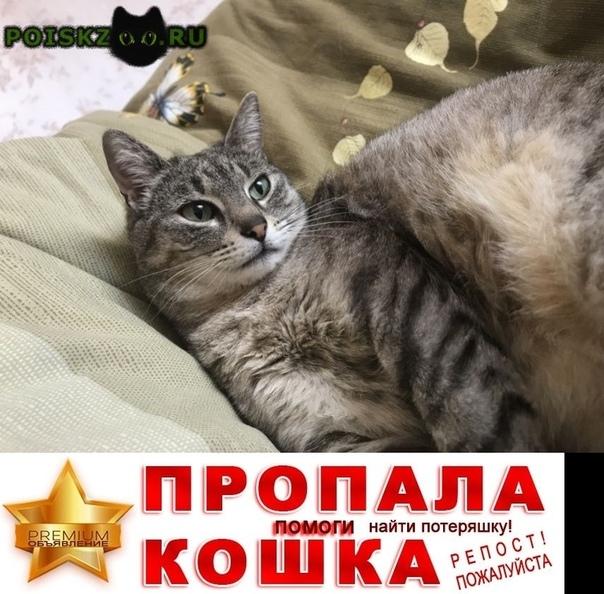 Пропала кошка в районе гаражей на ул. фадеева г.Геленджик