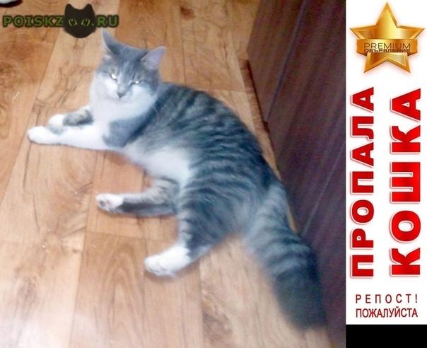 Пропала кошка г.Таганрог