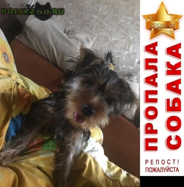 Пропала собака кобель щенок йорка г.Москва