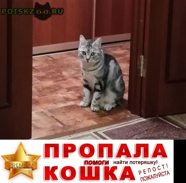 Пропал кот г.Курган