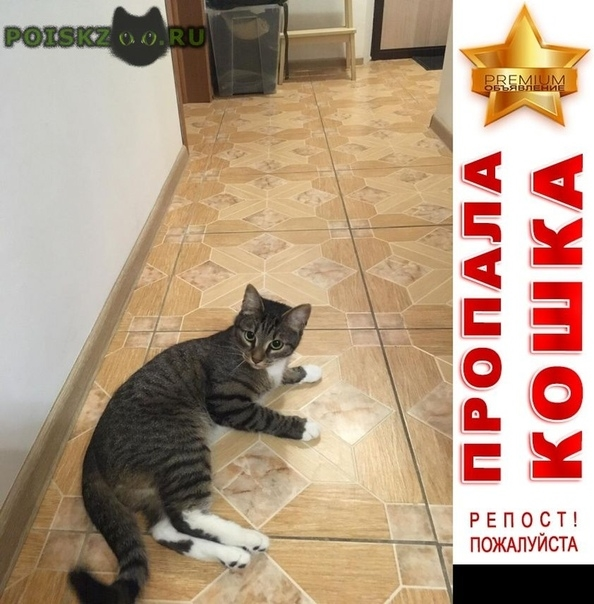 Пропал кот в мкр. янтарный Балашиха