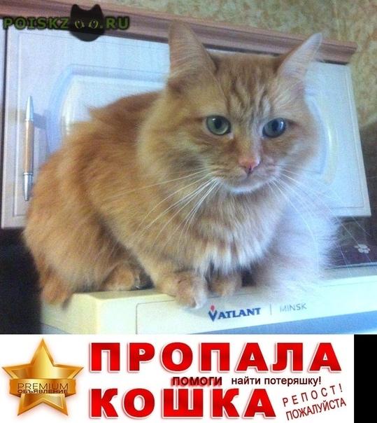 Пропал кот рыжик г.Одинцово
