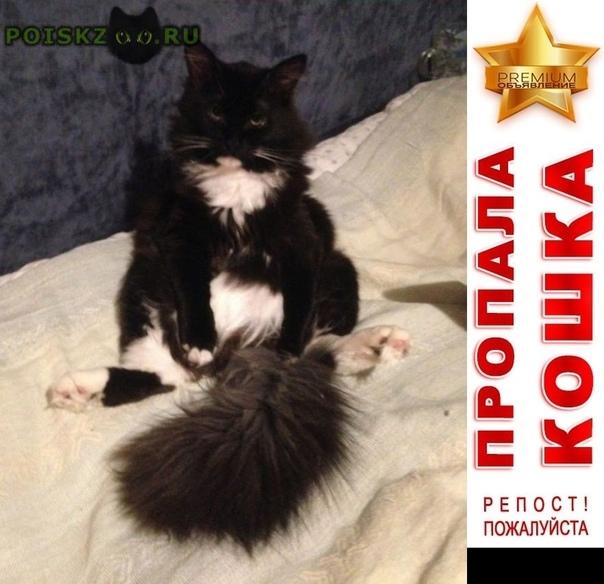 Пропал кот молодой черно-белый филя Москва