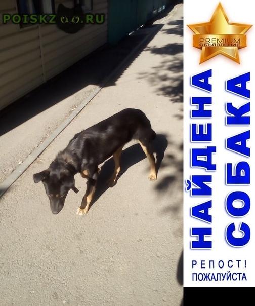 Найдена собака в ошейнике, не агрессивная. г.Батайск