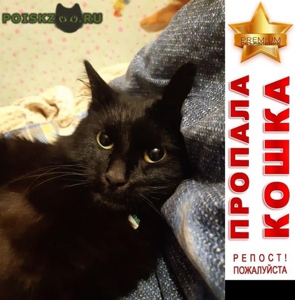 Пропал кот чёрный г.Нижневартовск