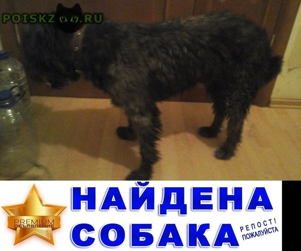 Найдена собака кобель г.Самара