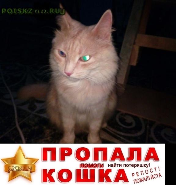 Пропал кот г.Березовский (Свердловская обл.)