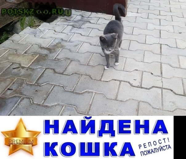 Найдена кошка г.Истра