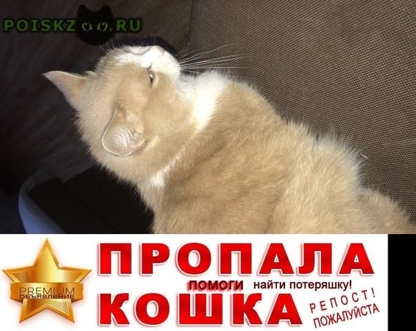 Пропал кот г.Балашиха