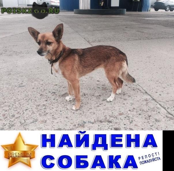 Найдена собака г.Красноярск
