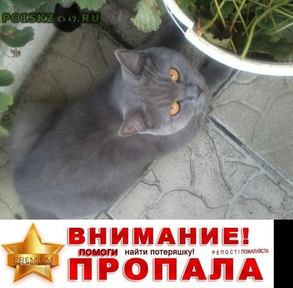 Пропал кот британский г.Красногорск