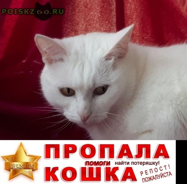 Пропал кот белый г.Шереметьевский