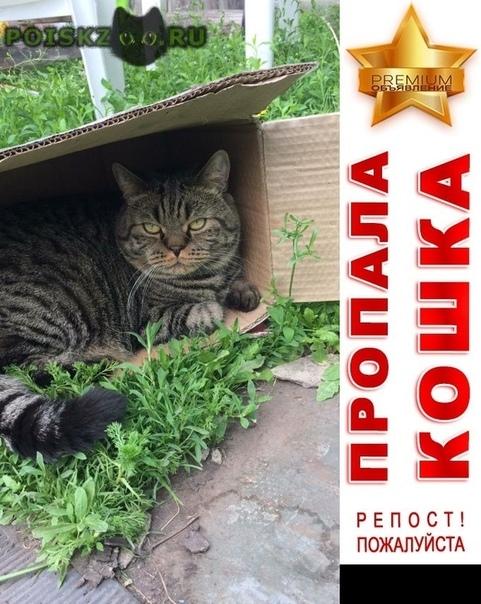 Пропал кот помогите вернуть друга г.Красноярск