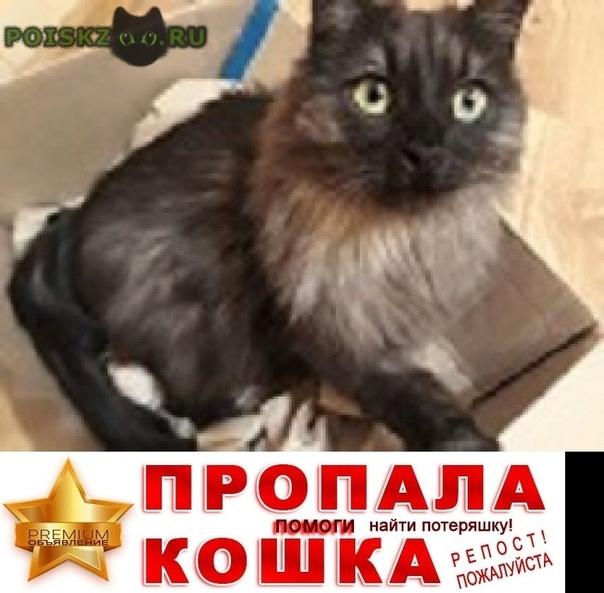 Пропала кошка г.Иркутск