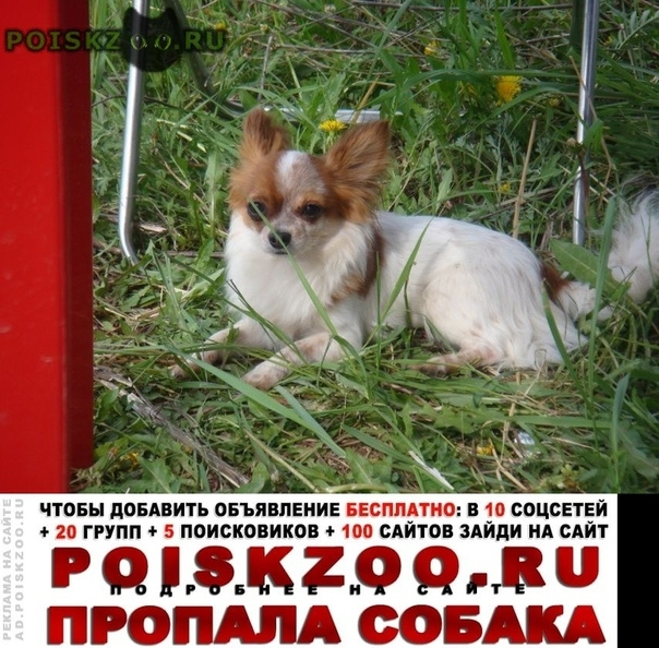 Пропала собака кобель Домодедово