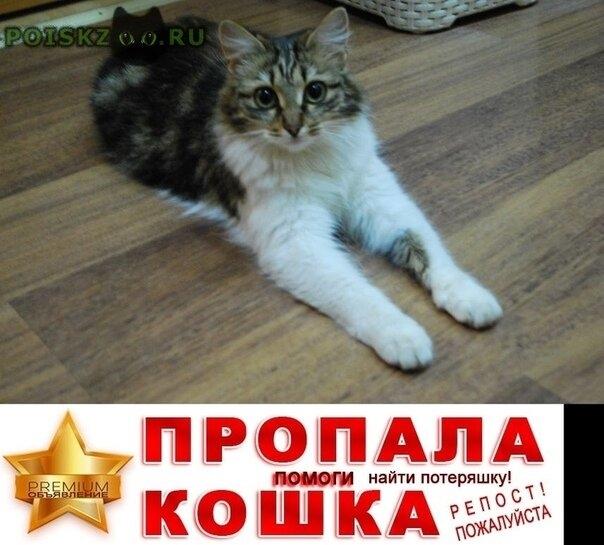 Пропала кошка в ярославле за брагинской лентой г.Ярославль
