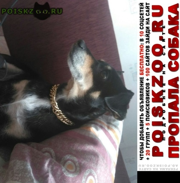 Пропала собака г.Челябинск