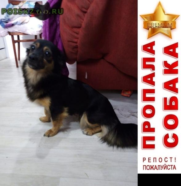 Пропала собака черная маленькая г.Красноярск