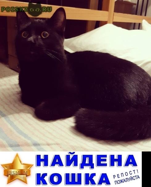 Найден кот черный, молодой г.Казань
