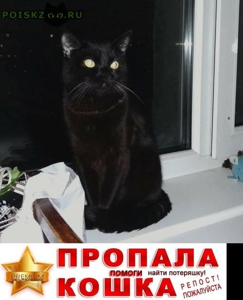 Пропал кот черный г.Казань