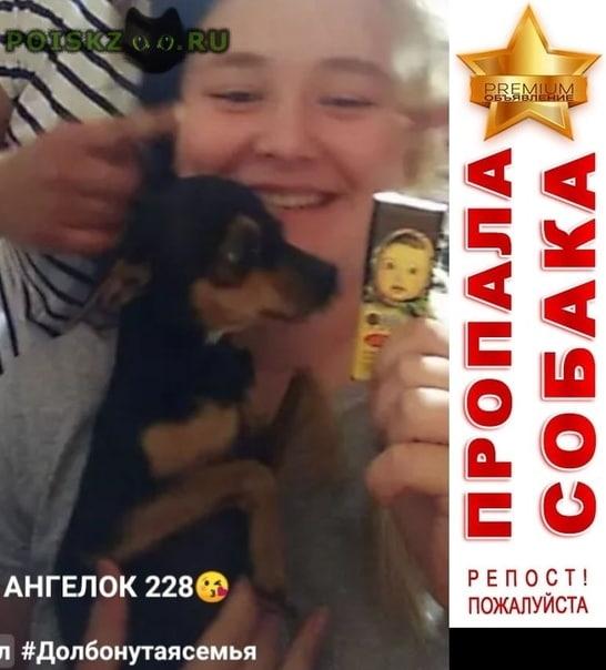 Пропала собака кобель помогите найти моего зайку  г.Новосибирск