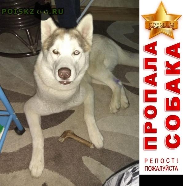 Пропала собака кобель г.Белозёрский