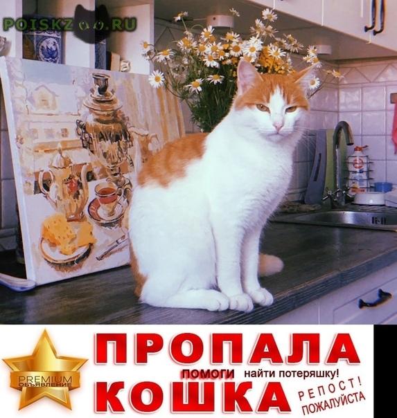 Пропал кот г.Казань
