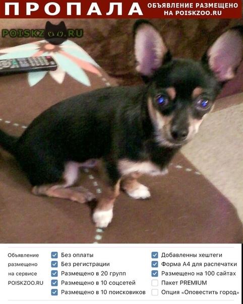 Пропала собака помогите пожалуйста найти г.Томск