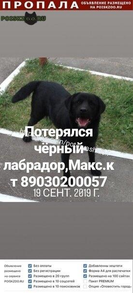 Пропала собака кобель чёрный лабрадор   г.Саратов